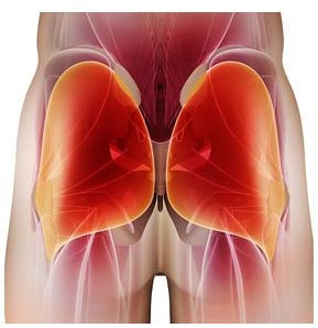 A coloured diagram of the gluteal muscles